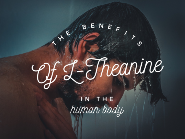 The Benefits of L-Theanine in the Human Body
